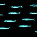 Alix - 14x3 cm - effetto notte
