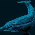 Bottom nose dolphin; cm.36x28; effetto notturno