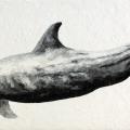 at27-al-delfino-soltanto-la-natura-ha-dato-quello-che-i-migliori-filosofi-cercano-amicizia-senza-alcun-vantaggio-95x48-giorno