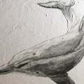 Bottom nose dolphin; cm.36x28; effetto diurno