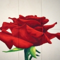 Rosa Paganini - 186x168cm