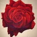 Grande Mandala di Rosa - 251x253cm
