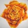 Mandala di Rosa Solare - 123x123cm