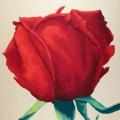 Rosa Atomena - 85x94cm