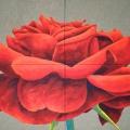 Rosa Paganini - 168x125cm