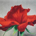 r11-la-bellezza-e-il-valore-assoluto-dun-organismo-estetico-187x141