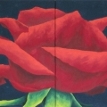 r174-rosa-paganini-127x63