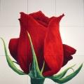 Rosa Baccarat - 186x191cm