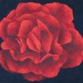 Pen Duick Rose - 79x74cm
