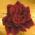 r87-mandala-di-rosa-di-mules-128x126Mandala di Rosa di Mules - 128x126cm